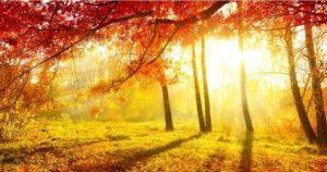 mediter-automne