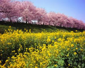 printemps-meditation