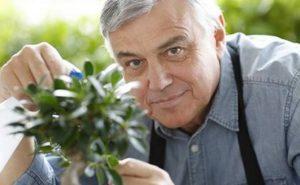 Le Zen par le jardinage et l'art du Bonsaï ?
